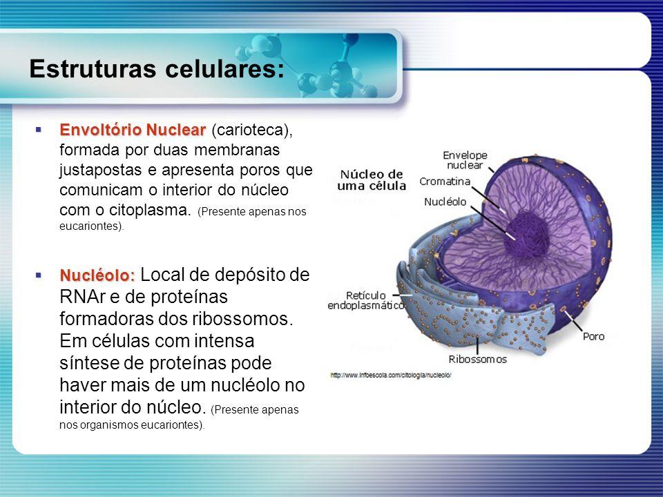 Estruturas celulares: Envoltório Nuclear Envoltório Nuclear (carioteca), formada por duas membranas justapostas e apresenta poros que comunicam o inte