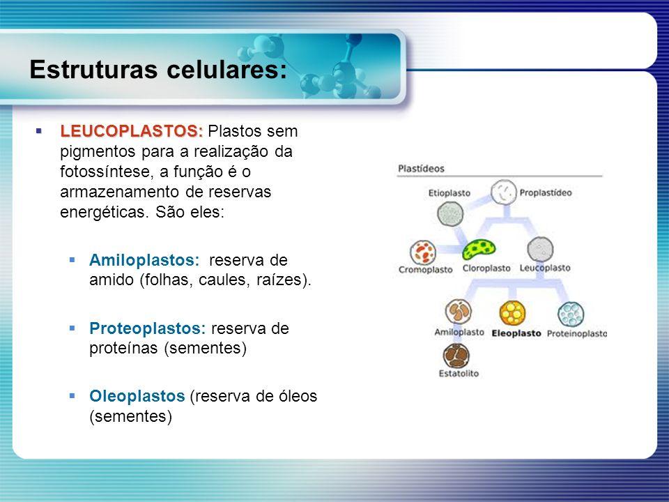 Estruturas celulares: LEUCOPLASTOS: LEUCOPLASTOS: Plastos sem pigmentos para a realização da fotossíntese, a função é o armazenamento de reservas ener