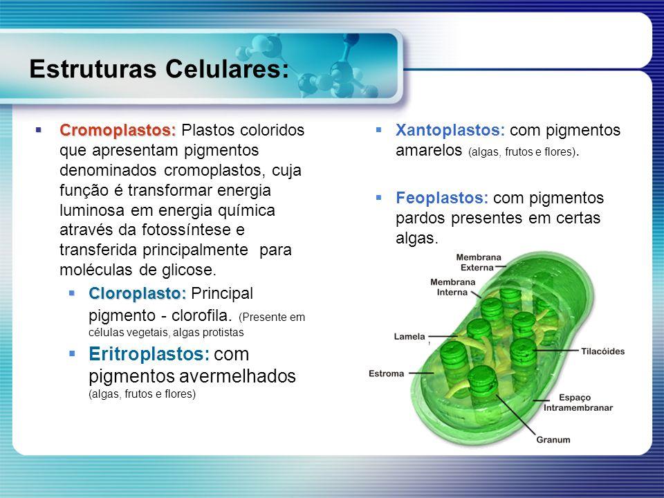 Estruturas Celulares: Cromoplastos: Cromoplastos: Plastos coloridos que apresentam pigmentos denominados cromoplastos, cuja função é transformar energ