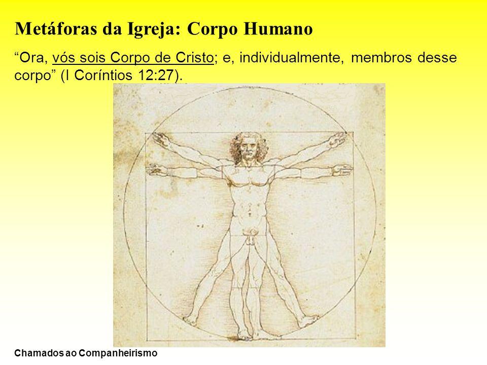 Metáforas da Igreja: Corpo Humano Ora, vós sois Corpo de Cristo; e, individualmente, membros desse corpo (I Coríntios 12:27). Chamados ao Companheiris