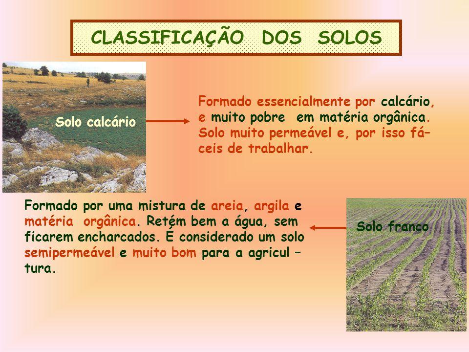 CLASSIFICAÇÃO DOS SOLOS Solo calcário Formado essencialmente por calcário, e muito pobre em matéria orgânica.