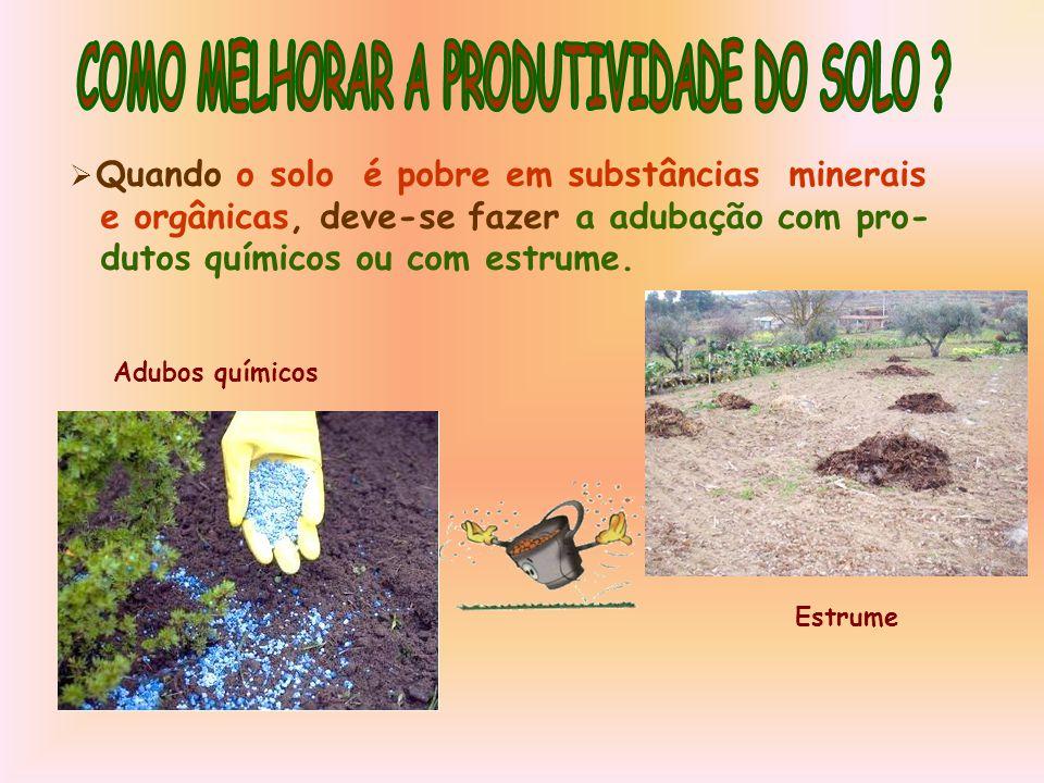  Quando o solo é pobre em substâncias minerais e orgânicas, deve-se fazer a adubação com pro- dutos químicos ou com estrume.
