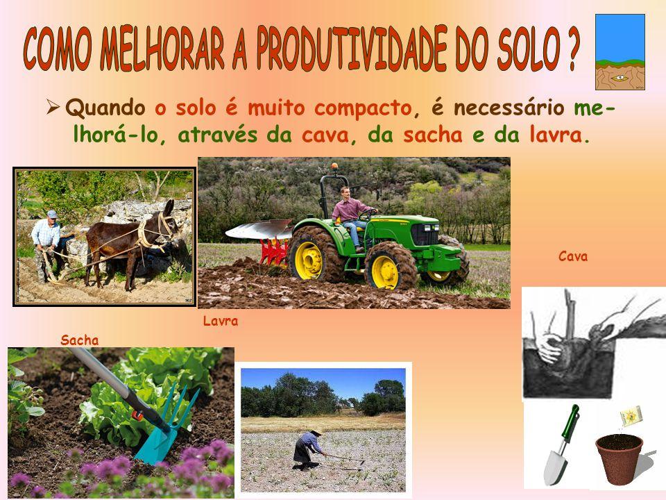  Quando o solo é muito compacto, é necessário me- lhorá-lo, através da cava, da sacha e da lavra.