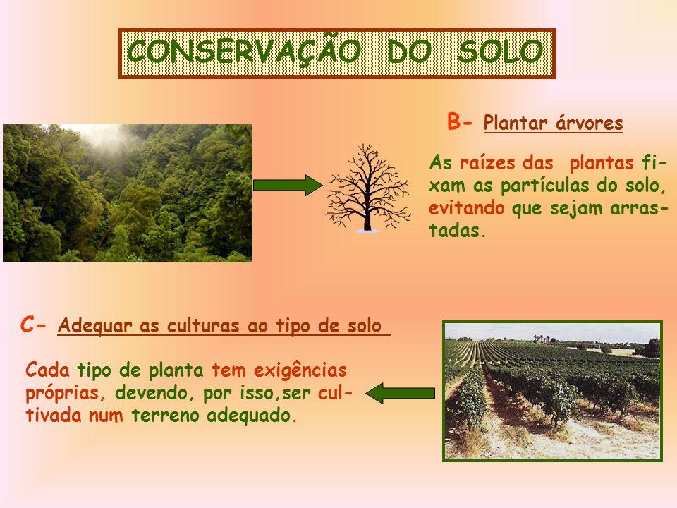 CONSERVAÇÃO DO SOLO B- Plantar árvores As raízes das plantas fi- xam as partículas do solo, evitando que sejam arras- tadas.