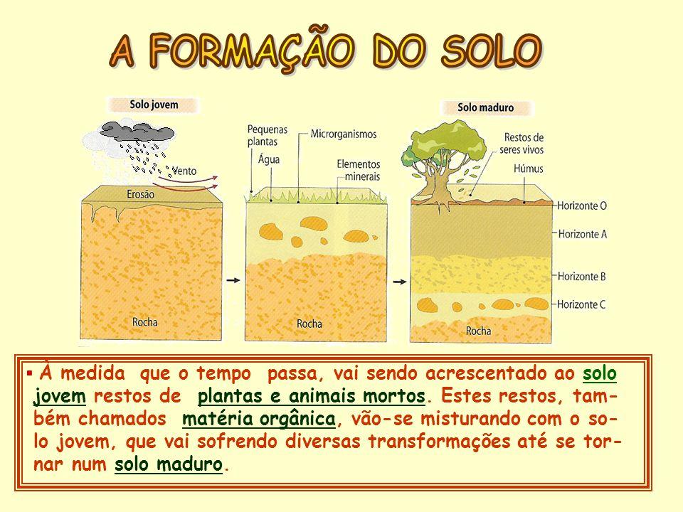 Os solos são indispensáveis à vida na Terra, mas correm inúmeros riscos.