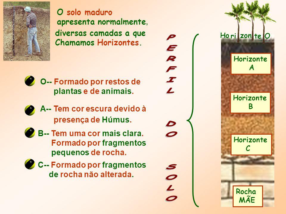Rocha MÃE Horizonte C Horizonte B Horizonte A Ho ri zon te O O solo maduro apresenta normalmente, diversas camadas a que Chamamos Horizontes.