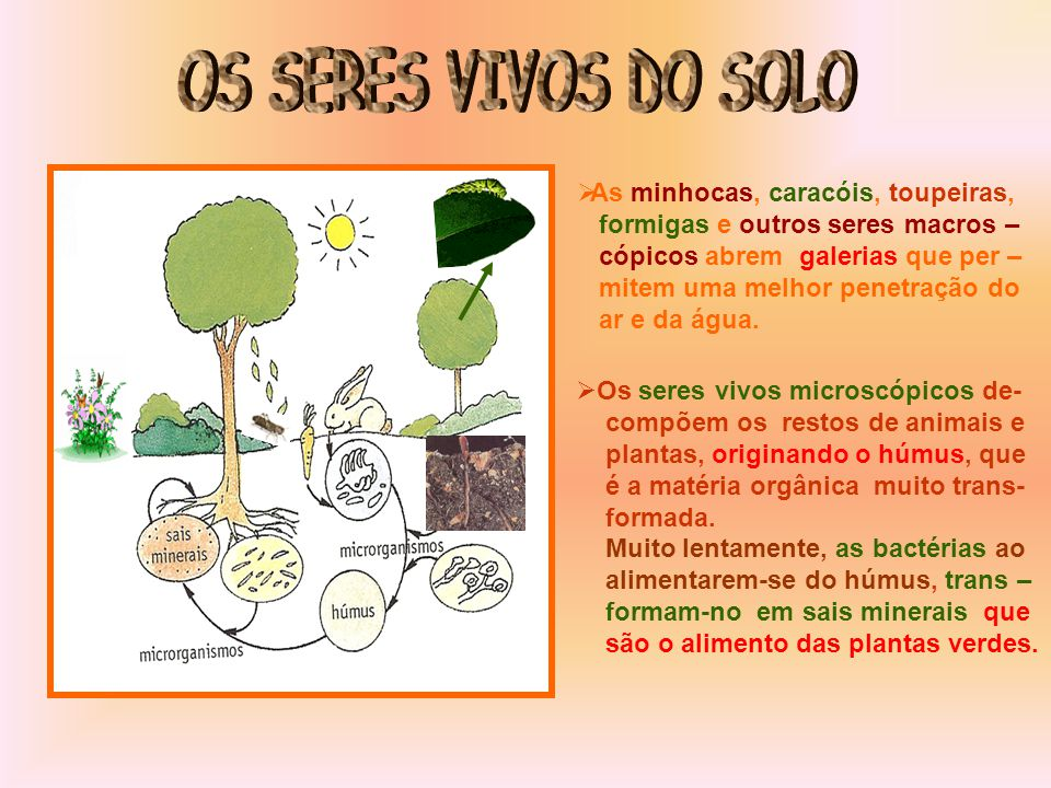 Já sabes que num solo existe uma parte orgânica e uma parte mineral.