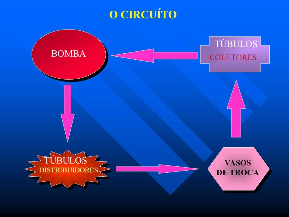 BOMBA DISTRIBUIDORES TÚBULOS VASOS DE TROCA COLETORES TÚBULOS O CIRCUÍTO