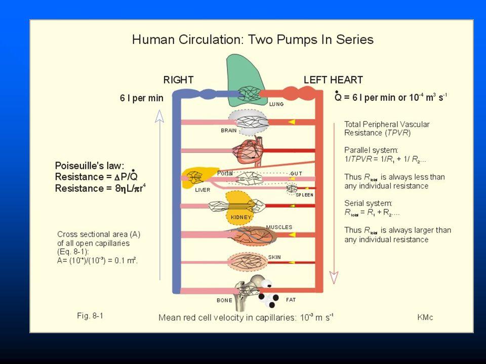 Organização do Sistema Circulatório CIRCUITOS EM SÉRIE E EM PARALELO