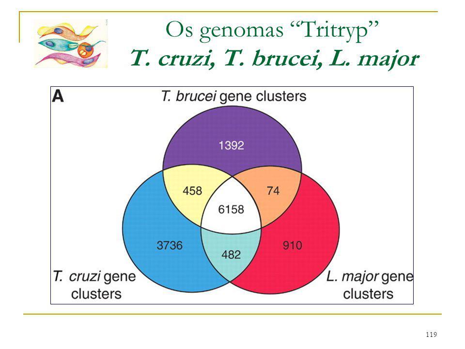"119 Os genomas ""Tritryp"" T. cruzi, T. brucei, L. major"