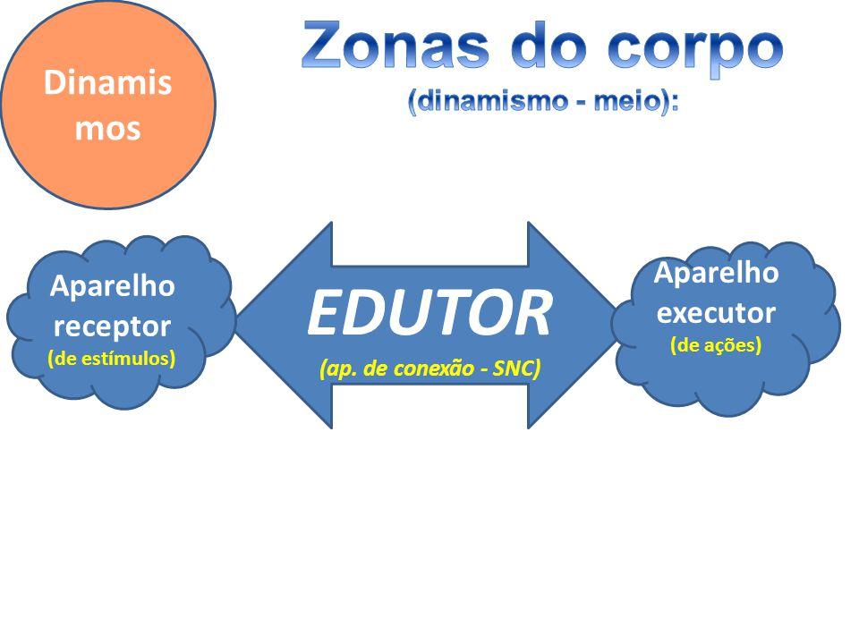 Dinamis mos EDUTOR (ap. de conexão - SNC) Aparelho receptor (de estímulos) Aparelho executor (de ações)
