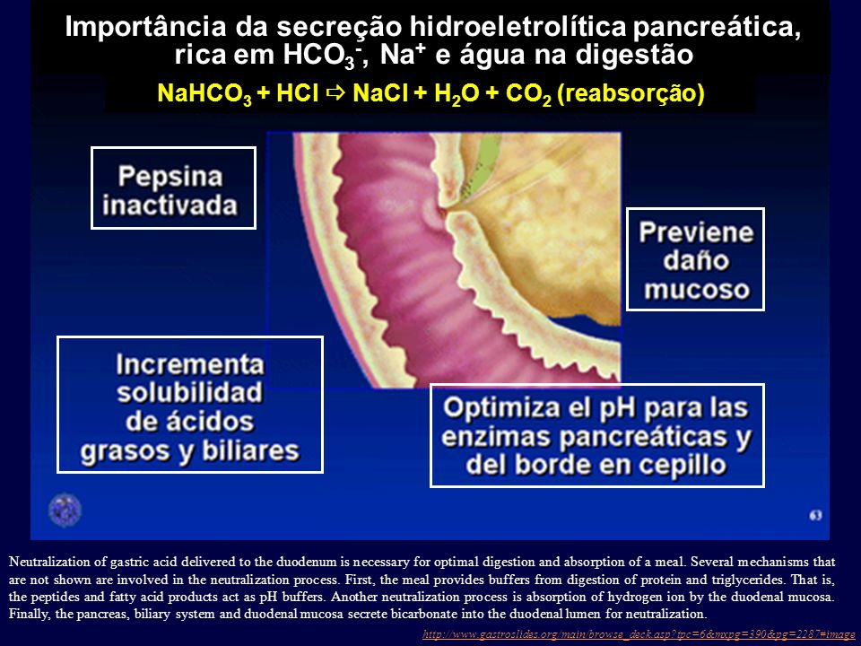 Neutralization of gastric acid delivered to the duodenum is necessary for optimal digestion and absorption of a meal.