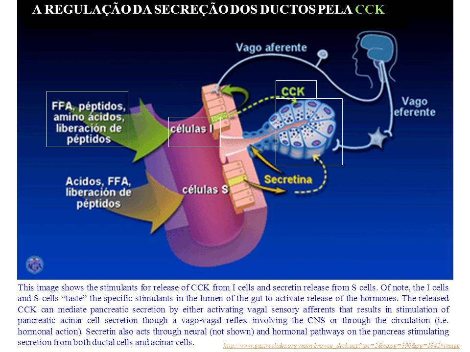This image shows the stimulants for release of CCK from I cells and secretin release from S cells.