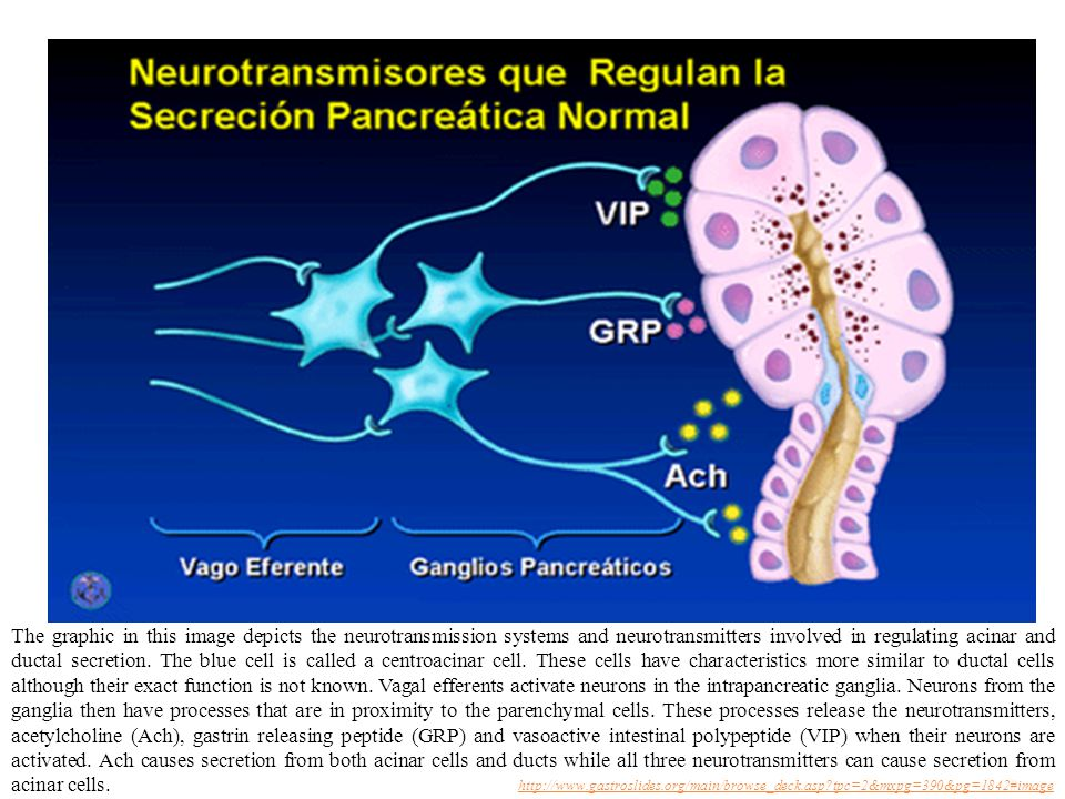 The graphic in this image depicts the neurotransmission systems and neurotransmitters involved in regulating acinar and ductal secretion.