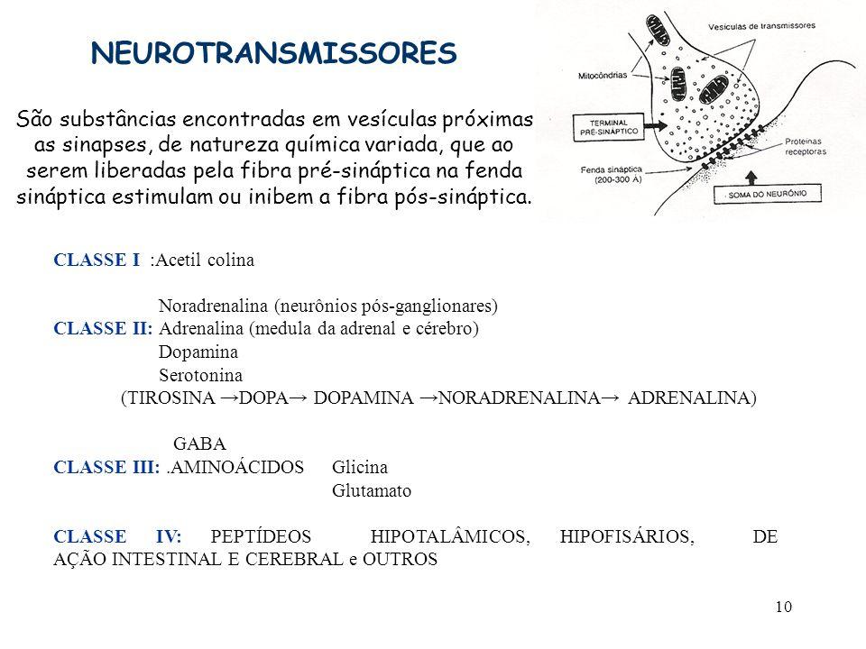 10 NEUROTRANSMISSORES São substâncias encontradas em vesículas próximas as sinapses, de natureza química variada, que ao serem liberadas pela fibra pr