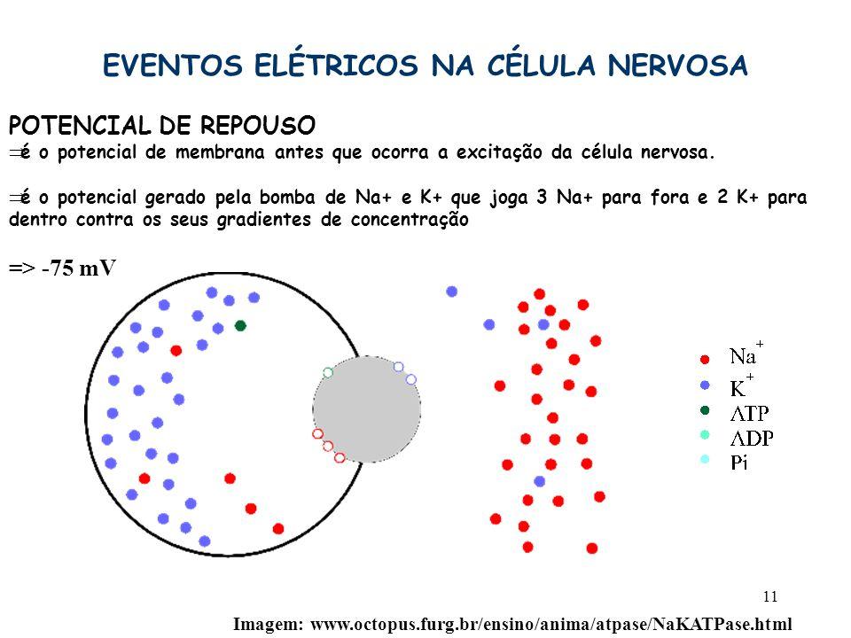 11 EVENTOS ELÉTRICOS NA CÉLULA NERVOSA POTENCIAL DE REPOUSO  é o potencial de membrana antes que ocorra a excitação da célula nervosa.  é o potencia