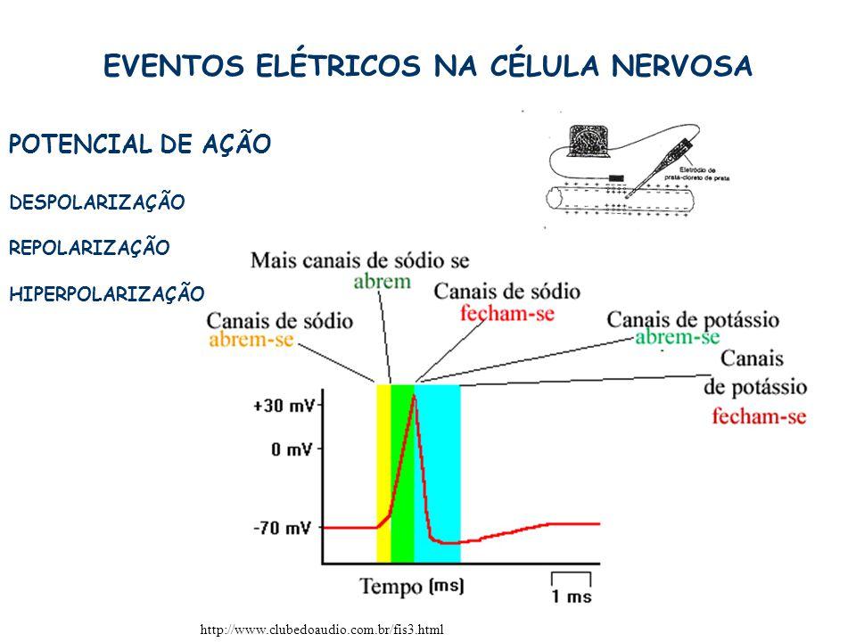 12 EVENTOS ELÉTRICOS NA CÉLULA NERVOSA POTENCIAL DE AÇÃO http://www.clubedoaudio.com.br/fis3.html DESPOLARIZAÇÃO REPOLARIZAÇÃO HIPERPOLARIZAÇÃO