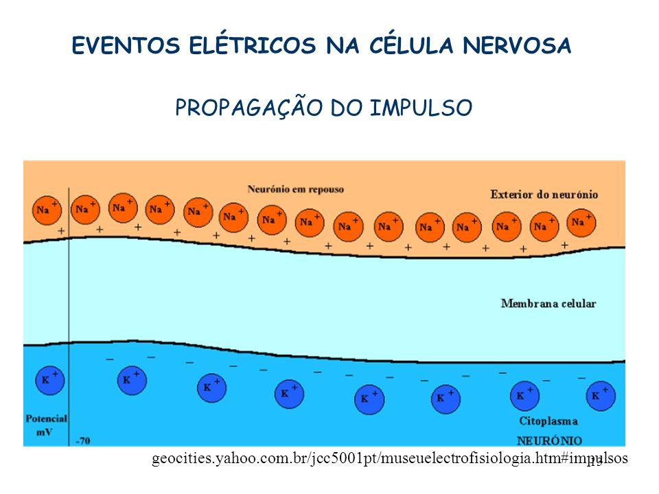 13 geocities.yahoo.com.br/jcc5001pt/museuelectrofisiologia.htm#impulsos EVENTOS ELÉTRICOS NA CÉLULA NERVOSA PROPAGAÇÃO DO IMPULSO