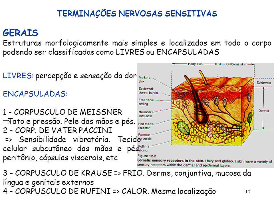 17 TERMINAÇÕES NERVOSAS SENSITIVAS GERAIS Estruturas morfologicamente mais simples e localizadas em todo o corpo podendo ser classificadas como LIVRES