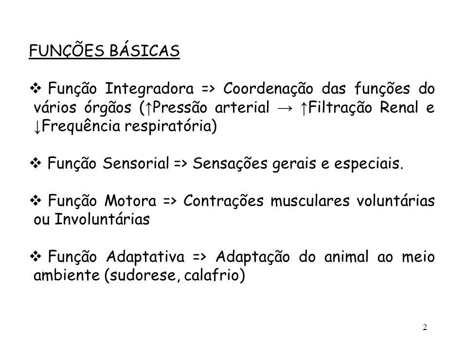 2 FUNÇÕES BÁSICAS  Função Integradora => Coordenação das funções do vários órgãos ( ↑ Pressão arterial → ↑ Filtração Renal e ↓ Frequência respiratóri