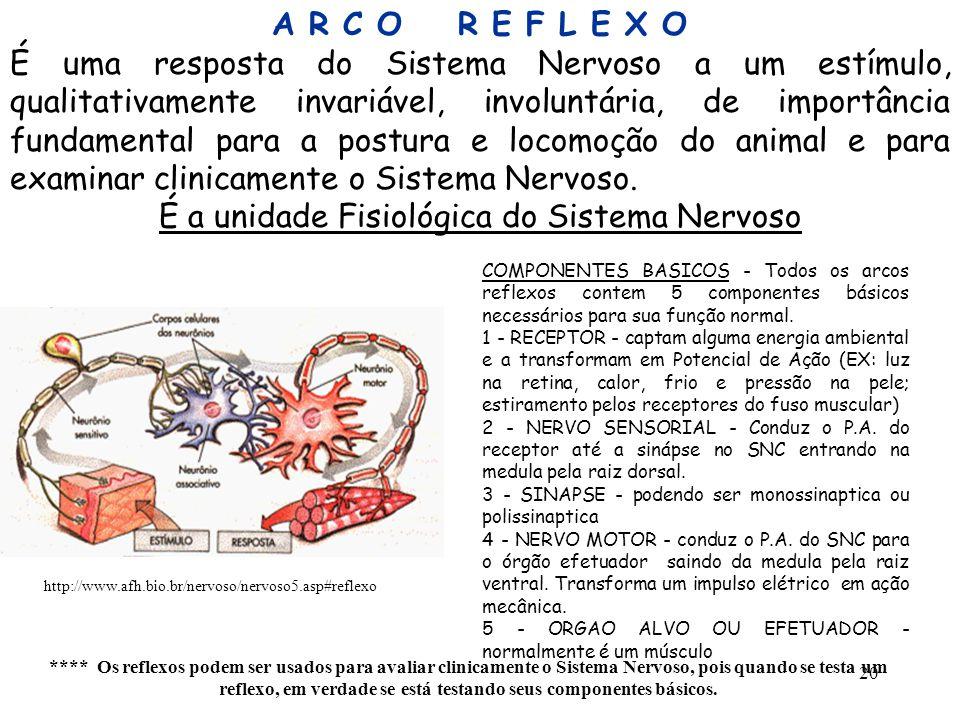 20 A R C O R E F L E X O É uma resposta do Sistema Nervoso a um estímulo, qualitativamente invariável, involuntária, de importância fundamental para a