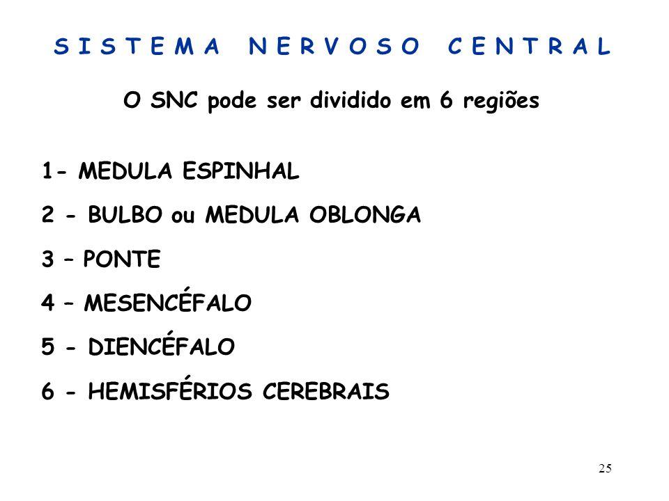 25 S I S T E M A N E R V O S O C E N T R A L O SNC pode ser dividido em 6 regiões 1- MEDULA ESPINHAL 2 - BULBO ou MEDULA OBLONGA 3 – PONTE 4 – MESENCÉ