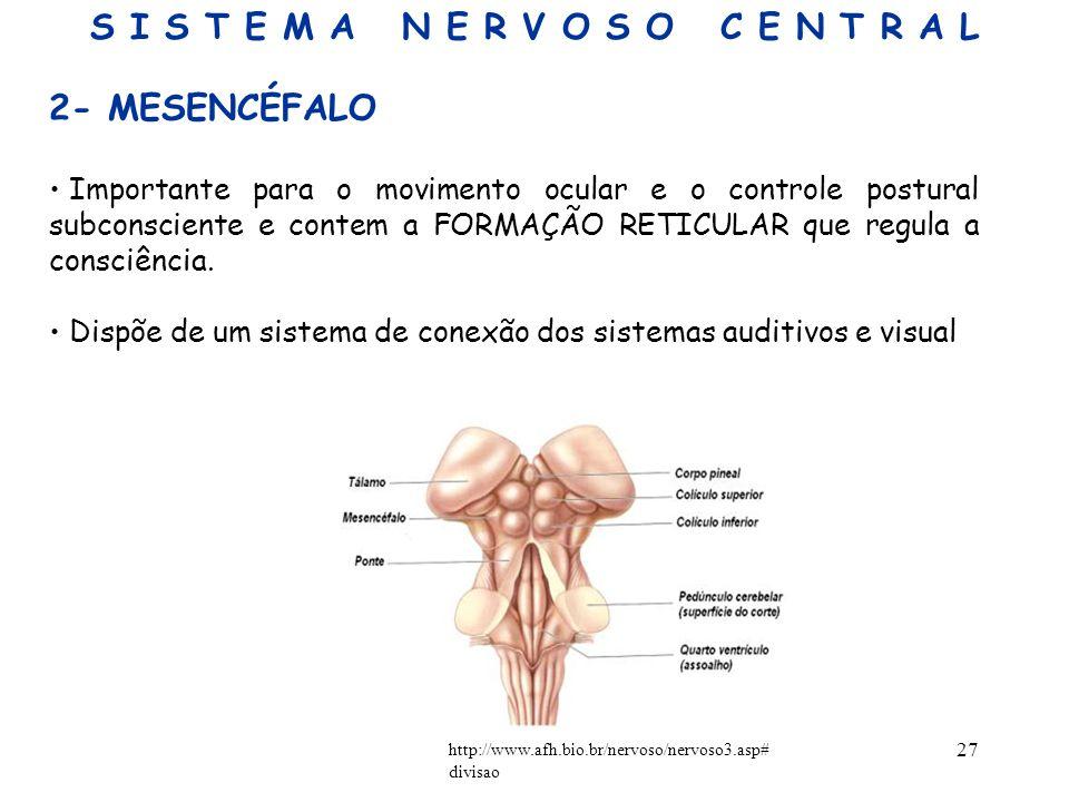 27 2- MESENCÉFALO Importante para o movimento ocular e o controle postural subconsciente e contem a FORMAÇÃO RETICULAR que regula a consciência. Dispõ