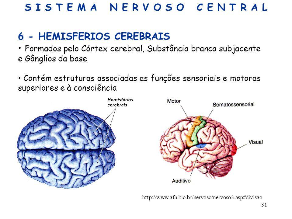 31 6 - HEMISFERIOS CEREBRAIS Formados pelo Córtex cerebral, Substância branca subjacente e Gânglios da base Contém estruturas associadas as funções se