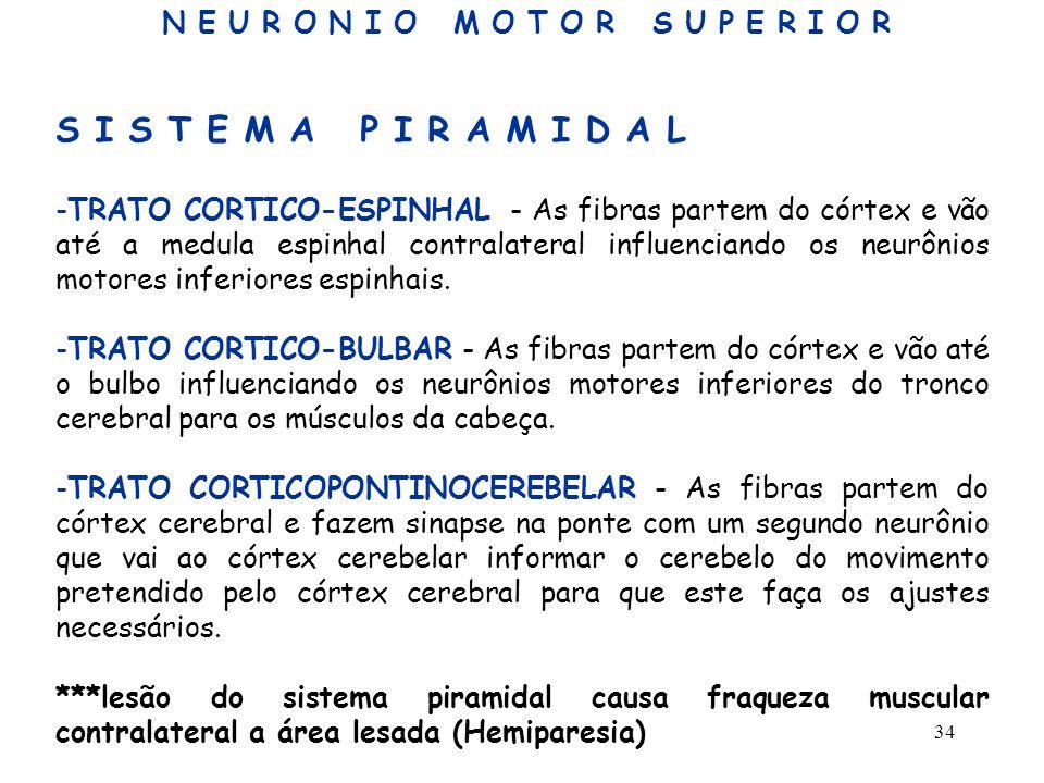 34 S I S T E M A P I R A M I D A L -TRATO CORTICO-ESPINHAL - As fibras partem do córtex e vão até a medula espinhal contralateral influenciando os neu