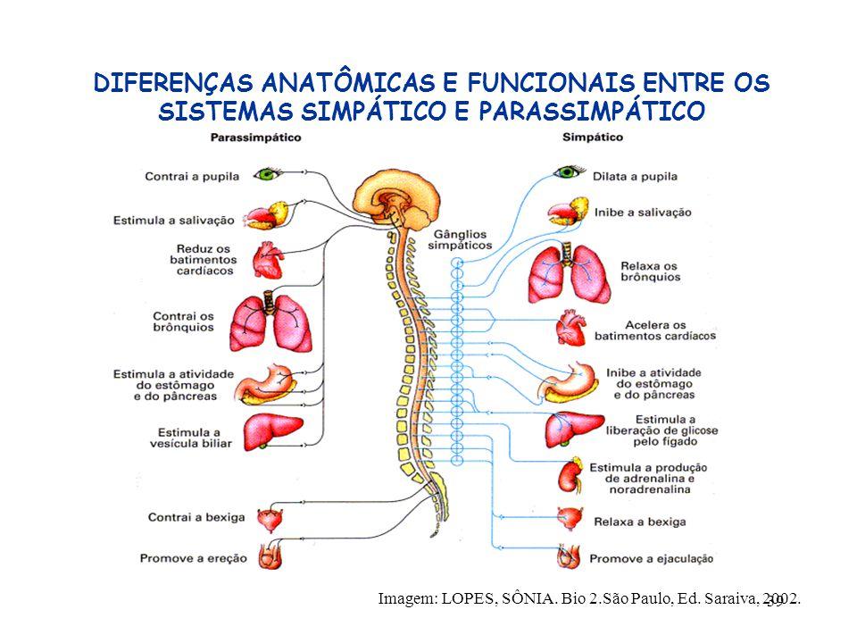 39 DIFERENÇAS ANATÔMICAS E FUNCIONAIS ENTRE OS SISTEMAS SIMPÁTICO E PARASSIMPÁTICO Imagem: LOPES, SÔNIA. Bio 2.São Paulo, Ed. Saraiva, 2002.