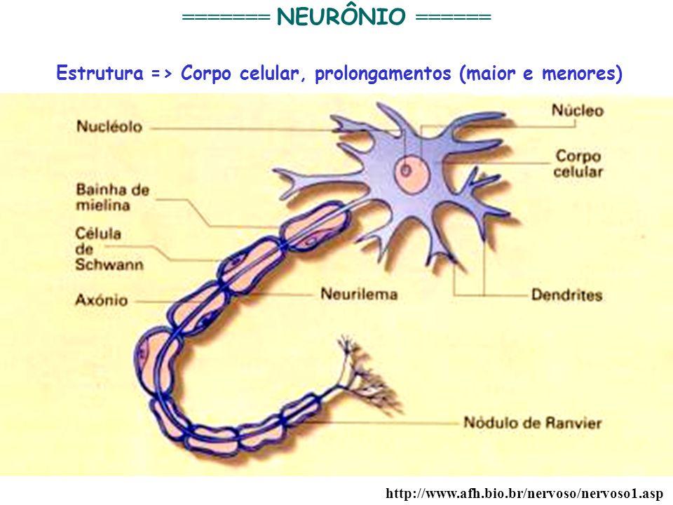 4 http://www.afh.bio.br/nervoso/nervoso1.asp ======= NEURÔNIO ====== Estrutura => Corpo celular, prolongamentos (maior e menores)