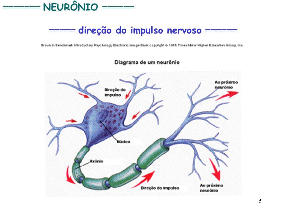 5 ======= NEURÔNIO ====== ===== direção do impulso nervoso ======