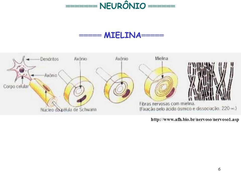 6 http://www.afh.bio.br/nervoso/nervoso1.asp ======= NEURÔNIO ====== ===== MIELINA =====
