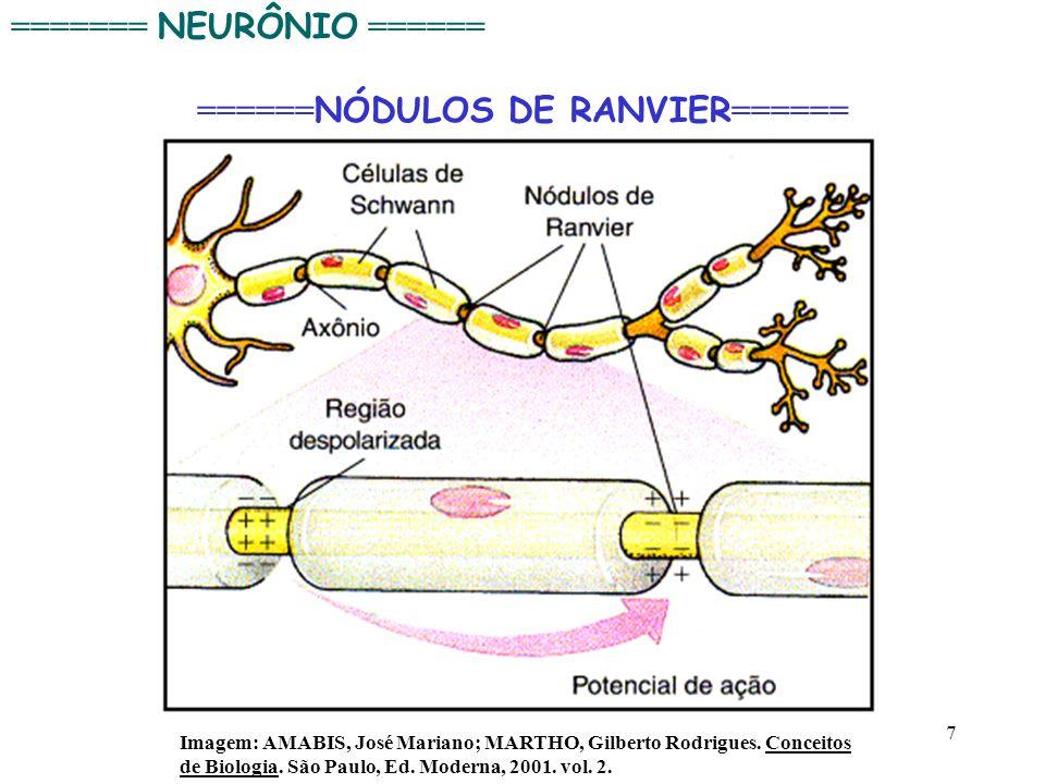 7 Imagem: AMABIS, José Mariano; MARTHO, Gilberto Rodrigues. Conceitos de Biologia. São Paulo, Ed. Moderna, 2001. vol. 2. ======= NEURÔNIO ====== =====