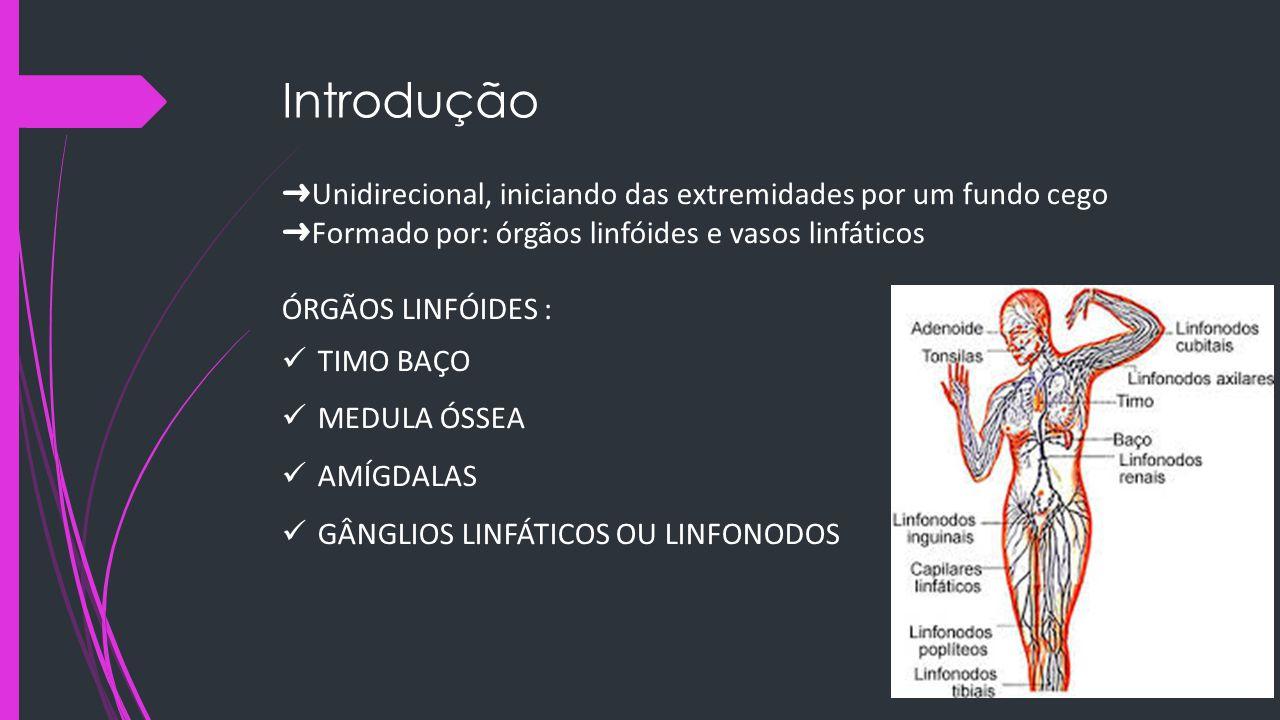 Introdução ➜ Unidirecional, iniciando das extremidades por um fundo cego ➜ Formado por: órgãos linfóides e vasos linfáticos ÓRGÃOS LINFÓIDES : TIMO BA