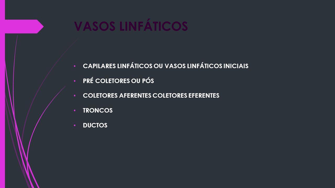 VASOS LINFÁTICOS CAPILARES LINFÁTICOS OU VASOS LINFÁTICOS INICIAIS PRÉ COLETORES OU PÓS COLETORES AFERENTES COLETORES EFERENTES TRONCOS DUCTOS