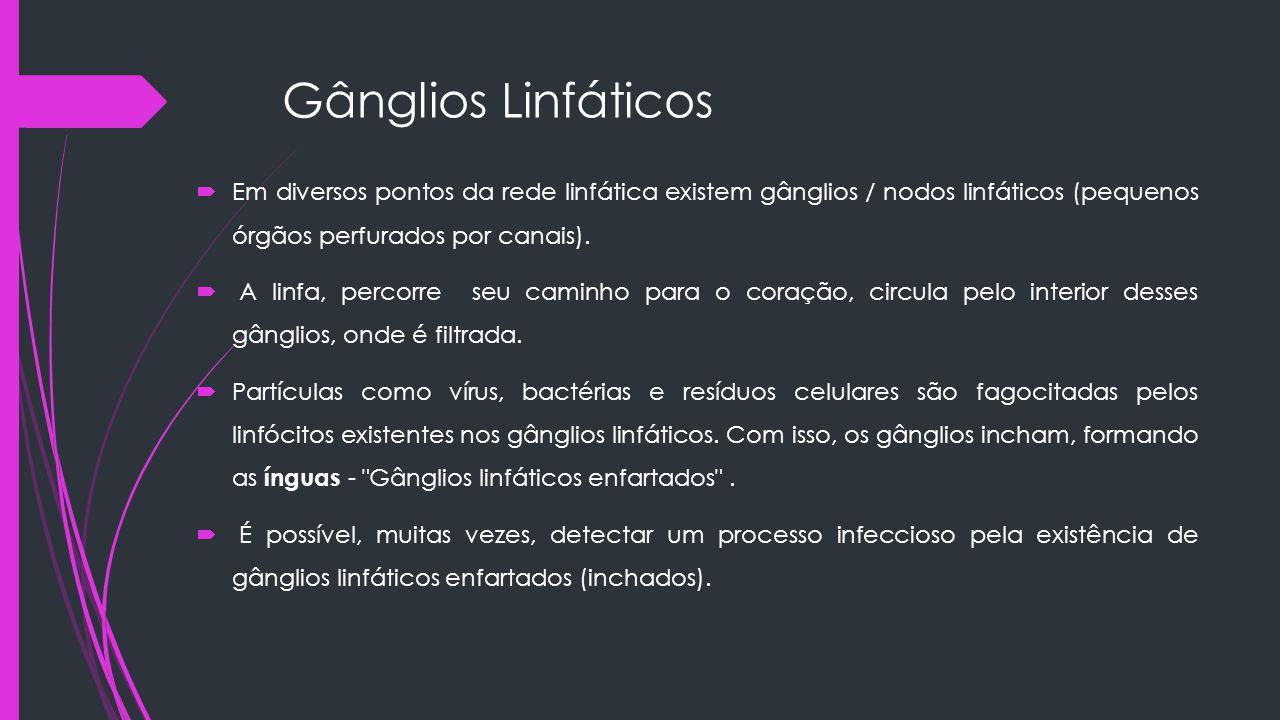 Gânglios Linfáticos  Em diversos pontos da rede linfática existem gânglios / nodos linfáticos (pequenos órgãos perfurados por canais).  A linfa, per