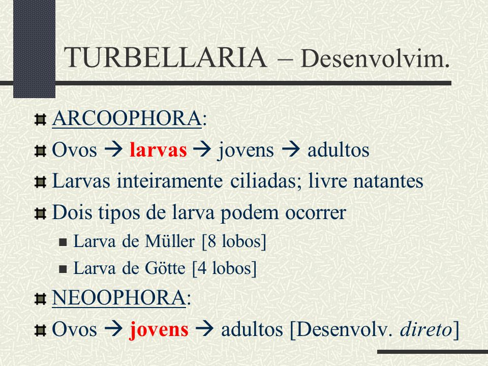Archoophora