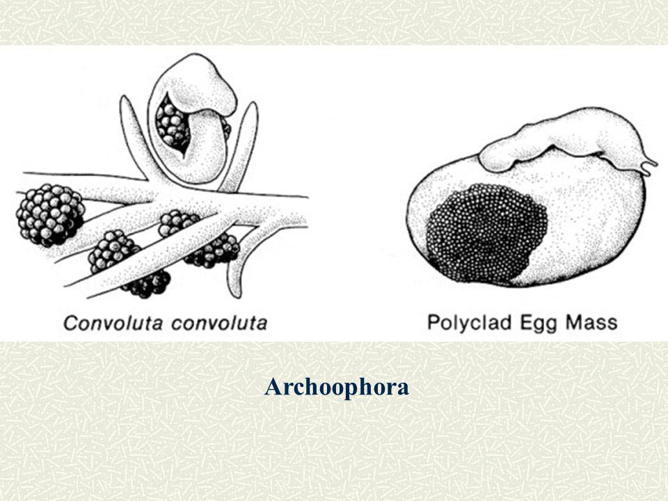 Neoophora