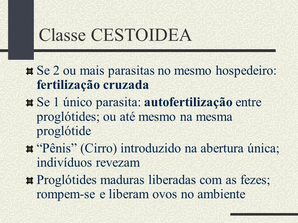 Cestoidea