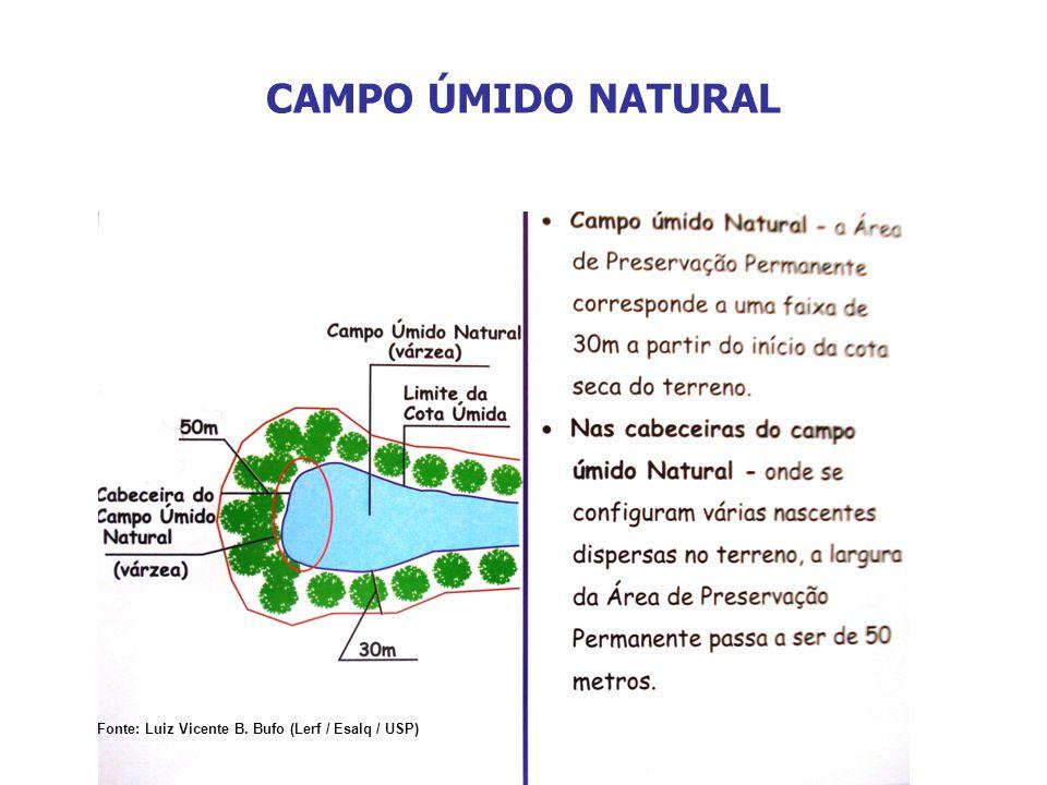 CAMPO ÚMIDO NATURAL Fonte: Luiz Vicente B. Bufo (Lerf / Esalq / USP)