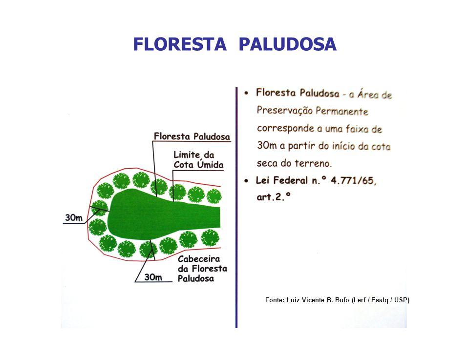 FLORESTA PALUDOSA Fonte: Luiz Vicente B. Bufo (Lerf / Esalq / USP)