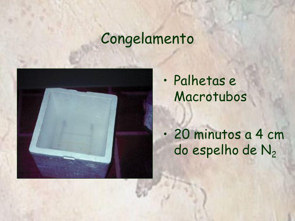 Palhetas e Macrotubos 20 minutos a 4 cm do espelho de N 2
