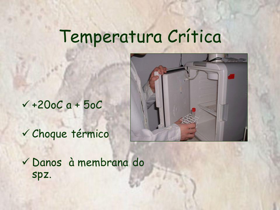 Taxa de Resfriamento Até 20 o C  Rápido 20 o C até 8 o C  Lento <0,3 o C/min 8 o C até 5 o C  Rápido