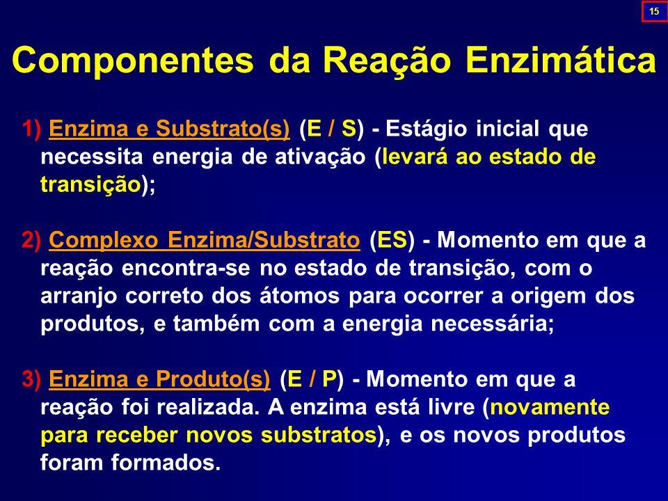 Componentes da Reação Enzimática 1) Enzima e Substrato(s) (E / S) - Estágio inicial que necessita energia de ativação (levará ao estado de transição); 2) Complexo Enzima/Substrato (ES) - Momento em que a reação encontra-se no estado de transição, com o arranjo correto dos átomos para ocorrer a origem dos produtos, e também com a energia necessária; 3) Enzima e Produto(s) (E / P) - Momento em que a reação foi realizada.