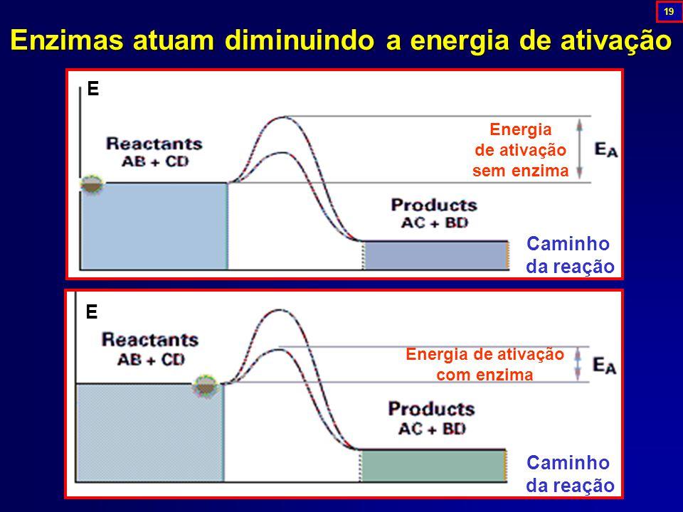 Enzimasatuam diminuindo a energia de ativação Enzimas atuam diminuindo a energia de ativação Caminho da reação E Energia de ativação sem enzima E Caminho da reação Energia de ativação com enzima 19