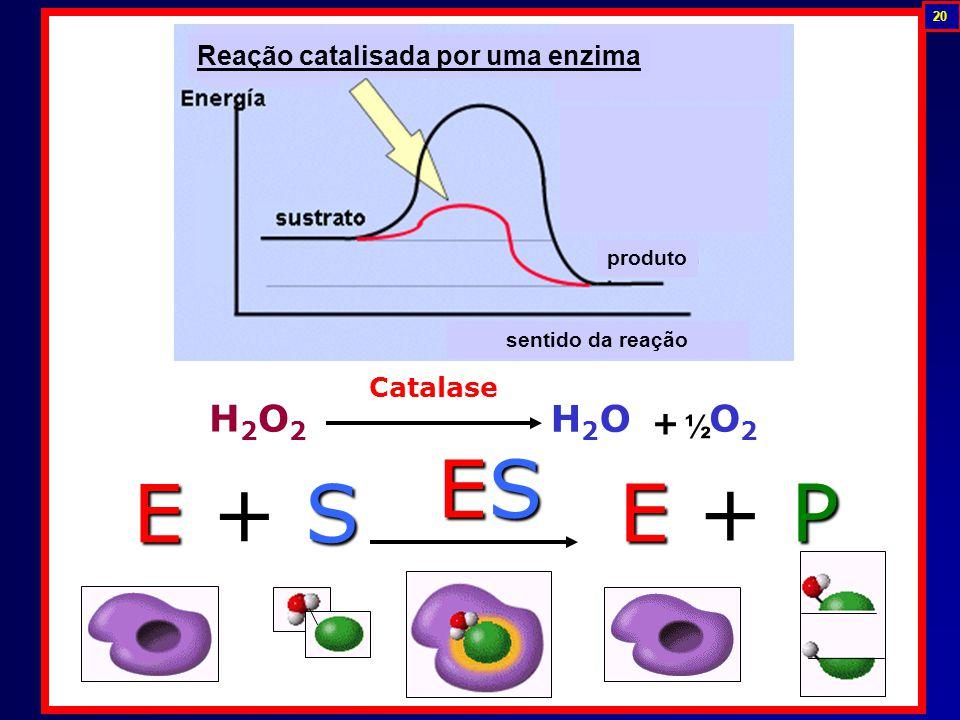 E + S E + PE + PE + PE + P ESESESES H2O2H2O2 H2OH2O O2O2 + Catalase ½ Reação catalisada por uma enzima produto sentido da reação 20