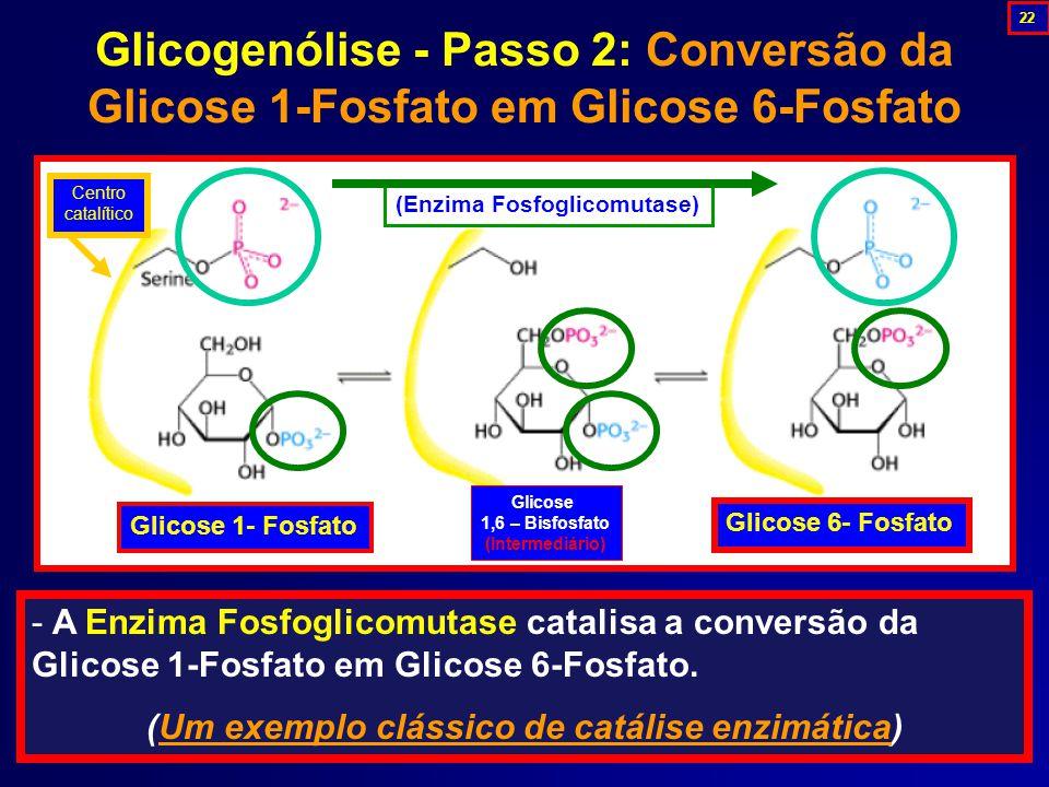 Glicogenólise - Passo 2: Conversão da Glicose 1-Fosfato em Glicose 6-Fosfato - A Enzima Fosfoglicomutase catalisa a conversão da Glicose 1-Fosfato em Glicose 6-Fosfato.