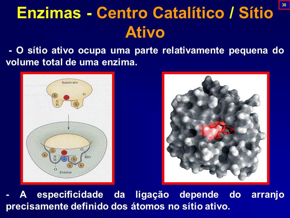 Enzimas - Centro Catalítico / Sítio Ativo - O sítio ativo ocupa uma parte relativamente pequena do volume total de uma enzima.