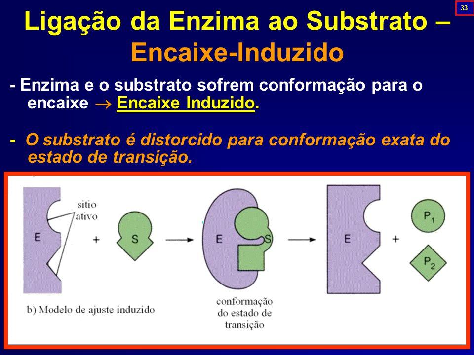 Encaixe Induzido.- Enzima e o substrato sofrem conformação para o encaixe  Encaixe Induzido.
